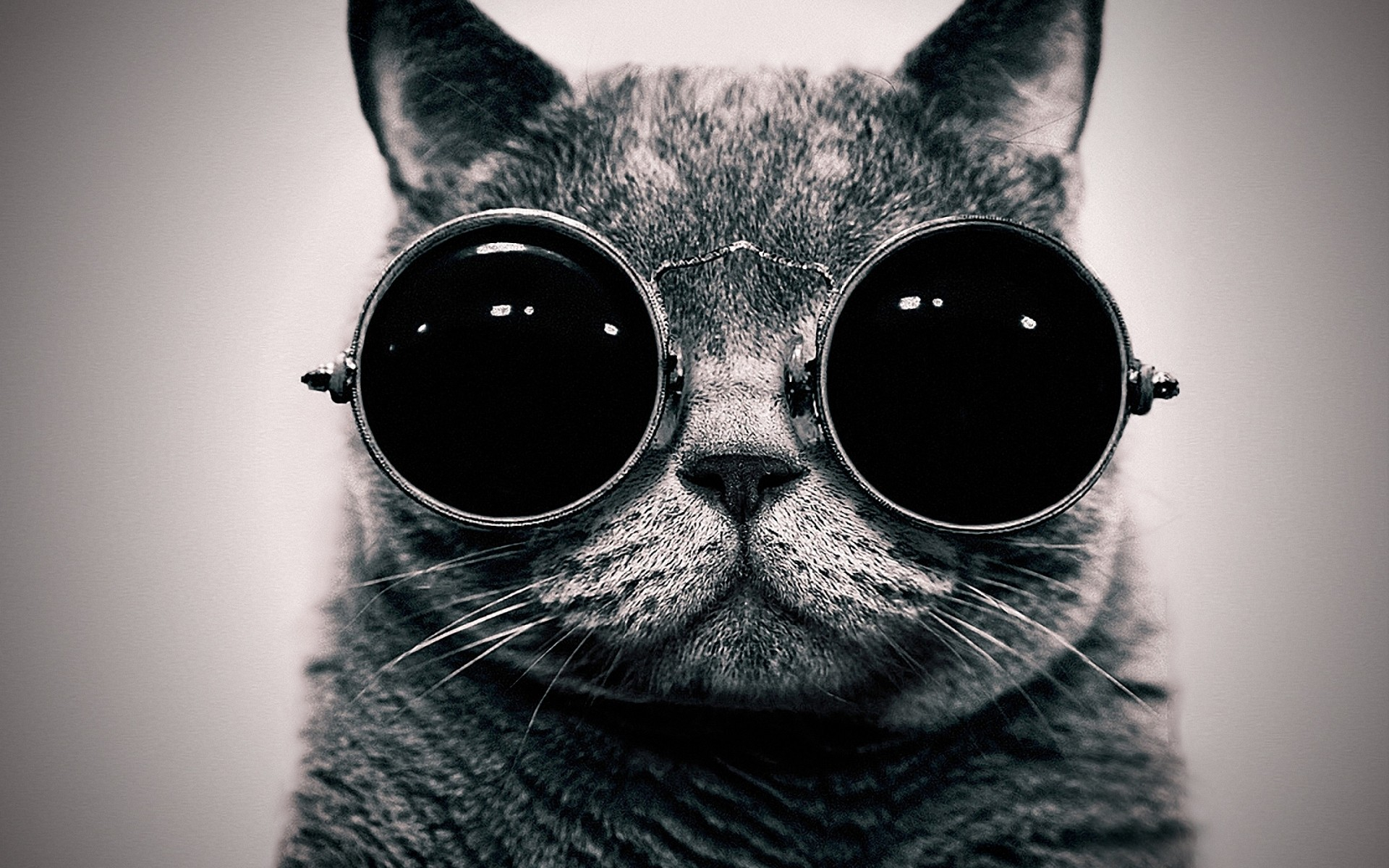 Cat Memes Tumblr High cat with sunglasses