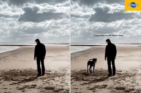 edigree: A Dog Makes Your Life Happier. Adopt